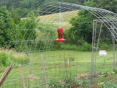 would be ok when covered in grapes? re. Cattle panel grape arbor .