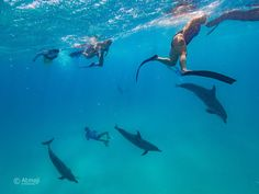 Such an incredible sight. This is what the #humandolphinconnection is all about #swimwilddolphin #onelove #wilddolphin #bestplaceswimwilddolphin #Bimini #Bahamas