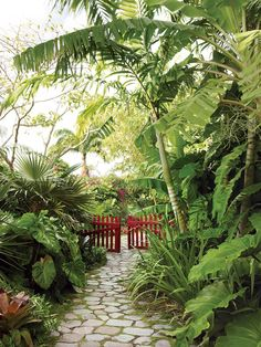 photographs of artists Helen and Brice Marden's inn in Nevis, in the Caribbean, with gardens designed by Raymond Jungles