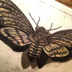 """Realism drawing of dead head hawk moth 8 1/2"""" by 11"""" by JessEllOrion  Carl graphite , watercolor , color pencil , ink"""