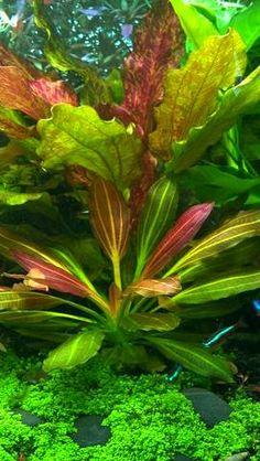 Brian Epping   Aquarium Photo Gallery