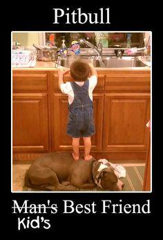 pitbull   kid's best friend.