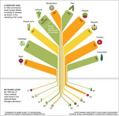 We used to have 307 kinds of corn 80 years biodiversity food infographic Monsanto National Geographic, Food System, Variety Of Fruits, Fruits And Vegetables, Veggies, Growing Vegetables, Beets, Food For Thought, Diversity