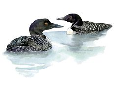 Loons Pair Pen and Ink Watercolor Painting Drawing by WildFernFarm