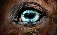 Wise & loyal -- through the eyes we see the soul of a majestic horse. How we treat our animals in an indication of the true heart of our society.