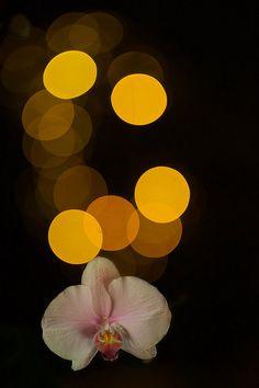 Orchid 'n Bokeh