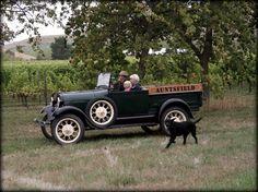 Martha the car (with Sammy the dog) Auntsfield Estate Marlborough Antique Cars, Dog Cat, Wine, Pets, Friends, Vintage Cars, Amigos, Boyfriends, Animals And Pets