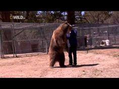 Il Grizzly si stufa ed attacca l'uomo! - Melatiro.it
