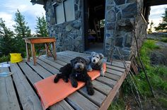 Two hipster Pumi Dogs, Sofi and Yogi, on the deck of Pechuck Mountain Lookout, Oregon.     Rare dog breeds...more information on rare dogs...  http://doggytidbits.blogspot.com