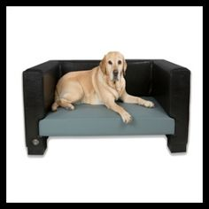 Chester & Wells Windsor dog bed is a contemporary faux leather dog bed which is stylish and fits beautifully in any home. Plush Dog Bed, Dog Sofa Bed, Sofa Beds, Cavachon Puppies, Puppy Supplies, Cool Dog Beds, Brown Dog, Dog Crate, Pet Beds