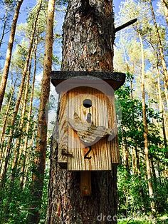 A beautiful designed wooden bird house in the forest. Image taken from below up to the trees and sky.