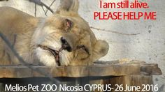 Petition update · https://www.facebook.com/Stop-Animal-Cruelty-Close-down-Melios-Torture-Center-267255803378953/?fref= · Change.org