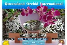 Promoting diverse interchange of sciences, arts, ideas and cultures pertaining to orchids via dynamic, interactive formats with an international horizon. Growing Orchids, South Africa, Planter Pots, Wordpress, Joy, Plant Pots