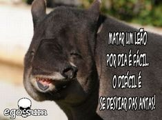 Panther, Humor, Memes, Animals, Animales, Humour, Animaux, Moon Moon, Funny Humor