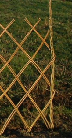 planting a living willow fence