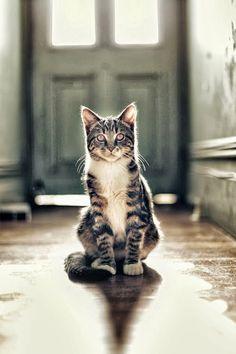 #Cat #Gato #Felino #Animal