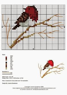 Aves Pájaros Bird