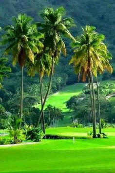 Golf in French Polynesia? That is TRULY paradise! At Moorea Green Pearl Golf Course. I Rock Bottom Golf Beautiful Landscape Wallpaper, Scenery Wallpaper, Beautiful Landscapes, Beautiful Gardens, Hd Wallpaper, Beautiful Nature Pictures, Amazing Nature, Nature Photos, Beautiful Places