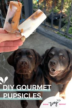 This easy frozen dog treat recipe is not only fun to make, but it's actually healthy for your dogs! I love making my own homemade dog popsicles because I know exactly what's in them. Healthy dogs are happy dogs! I hope you and your pups enjoy these DIY gourmet pupsicles as much as we do!