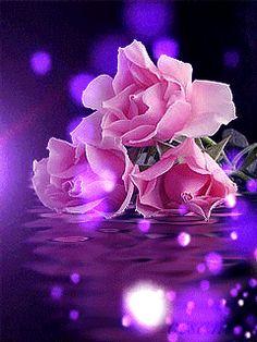 Imagenes Gifs: Rosas Rosas Burbujas