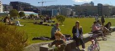 Waitangi Park, Wellington - Google Search
