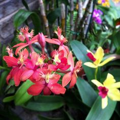 Orchids Galore!  (at Lewis Ginter Botanical Garden)