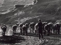 Martin Martinček Folk Art, Nostalgia, Mountains, Nature, Photography, Travel, Life, People, Author
