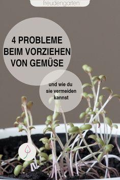 Probleme beim Vorziehen von Gemüse vermeiden - mit diesen Gartentipps klappt es! #Gartentipp #Gemüsebeet #freudengarten-