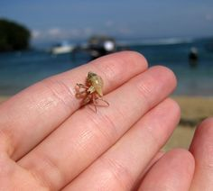 Baby hermit crab! awwwww! this is soo tiny i bet it can barely hold its shell up easily!