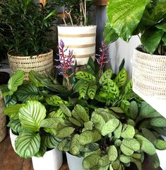 Bags Packed & Ready to Move into this Mini Forest We're Open 9 - 1 today. Come say hi :) ------------------------------------ # Indoor Garden, Indoor Plants, Say Hi, Houseplants, Planters, Packing, Urban, Mini, How To Make
