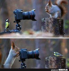 :) | Lustige Bilder, Sprüche, Witze, echt lustig