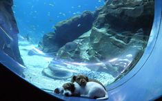 Adorable Foster Puppies Get Playdate at the Georgia Aquarium While It's Closed to the Public Small Kittens, Kittens And Puppies, Cute Puppies, Chihuahua Dogs, Pet Dogs, Shedd Aquarium, Georgia Aquarium, Foster Puppies, Puppy Play
