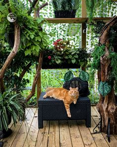 Kittens Cutest, Cats And Kittens, Cat House Diy, Outdoor Cats, Catio, Tropical Paradise, Fur Babies, Kitty, Pets