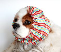 The money from the sale of this one goes to Cavalier Rescue USA
