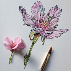 Noel Badges Pugh is a talented scientific illustrator and artist who has an incredible talent in drawing flora and fauna. Recently he created an amazing se