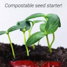 What plants are you growing this spring? Please share with us in the comments 🤗 Fruit Garden, Garden Plants, Indoor Plants, House Plants, Regrow Vegetables, Planting Vegetables, Growing Vegetables, Bottle Garden, Vegetable Garden Design