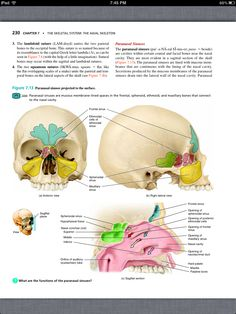 principles of anatomy and physiology chapter 7 the skeletal system the axial skeleton - Anatomy And Physiology Coloring Workbook Answers Chapter 7