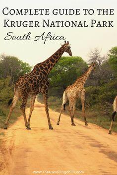 Complete Guide to the Kruger National Park South Africa | Self Drive safari guide Kruger Park
