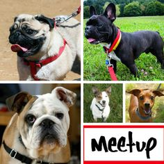 Our top 10 list of London Dog Meetups - friendly and social get togethers for London Dogs and their humans. The Dogvine, the place for All London dog Talk.