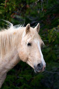 Barn decor rustic decor horse photo equine by MitchMcfarlanePhotos