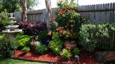 Fence line backyard garden pics. hgtv