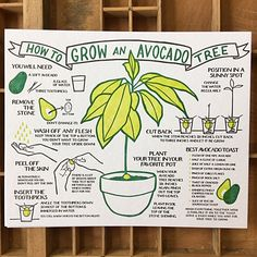 Herbs Gardening How To Grow An Avocado Tree Broadside - An letterpress poster based on our popular Lobster broadside. Printed on extra heavy Gmund Heidi recycled cover stock. Includes a great avocado toast recipe!