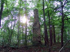Chimney in the woods - Old Home Place of Dr. Murry Family