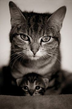 The moment a child is born,  the mother is also born.  She never existed before.  The women existed, but the mother, never.  A mother is something absolutely new.    Rajneesh  #funny #cute #cat