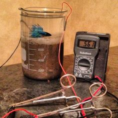Making your own simple microbial fuel cell. #AlternativeEnergy **SVD*