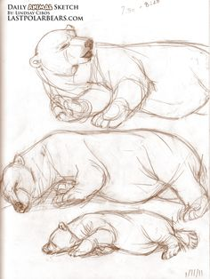 Daily_Animal_Sketch_066
