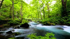 Nature Sound 14 - THE MOST RELAXING SOUNDS -