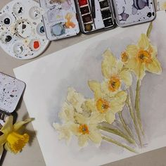 Deuxième tentative sur les jonquilles 😁 Ça n'est toujours bon, mais je progresse peut-être un peu 😊 . peinture.nissone.com . #aquarelle #watercolor #watercolour #watercolors #watercolours  #aquarelleart #aquarelle #watercolorpaint #watercolorpainting  #jonquille #daffodil  #jonquilleaquarelle #daffodilwatercolors #cindybarillet Flowers, Cards, Sketch, Water Colors, Floral Watercolor, Daffodils, Color Pencil Picture, Maps, Royal Icing Flowers