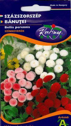 Évelő virágok : Százszorszép színkeverék Bellis Perennis, Margarita Flower, Daisy