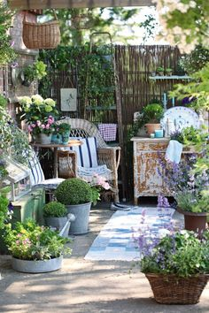 Must get my patio garden underway. LOVE.The house in the roses: Show Off Your Cottage Monday
